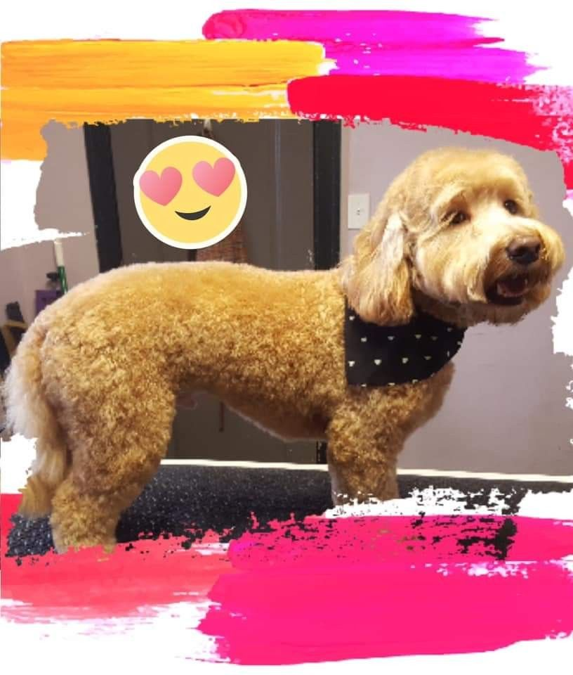 Pin By Groomer Ashlee Chicago On Grooming Chicago Groomer Dogs Animals
