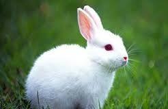 Resultado de imagen para conejo