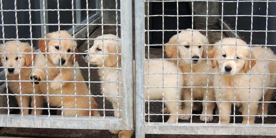Illegale Tiertransporte Das schmutzige Geschäft mit