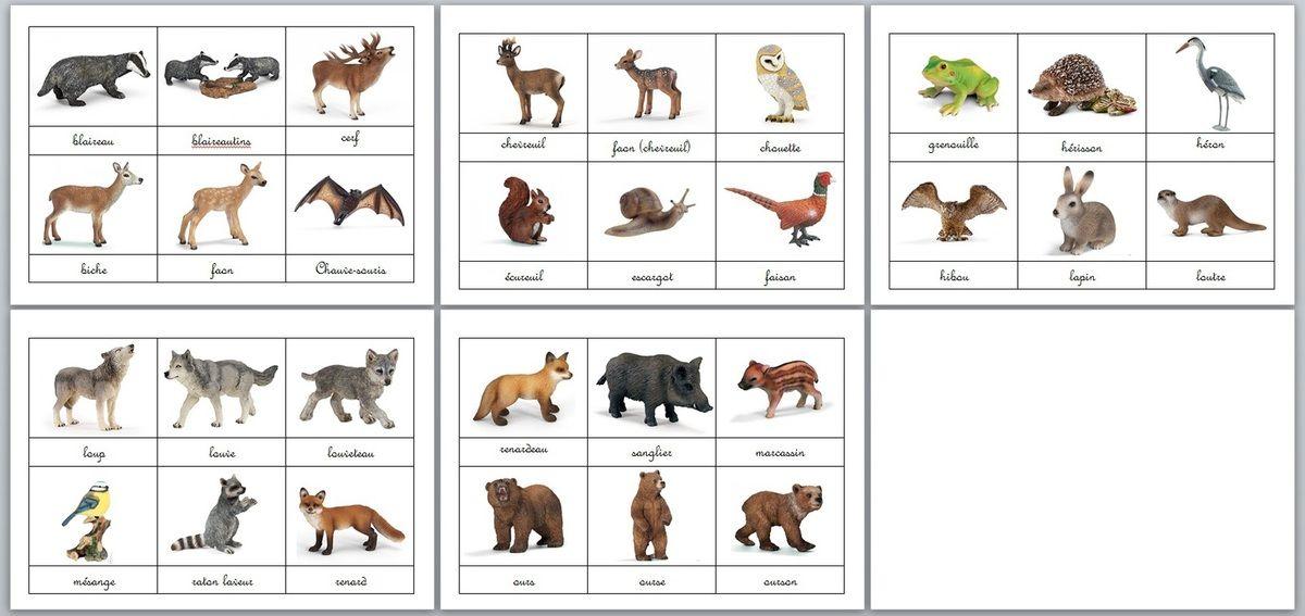 Cartes animaux de la for t ferme et domestique activit s enfants animaux cartes animaux et - Images animaux a imprimer ...