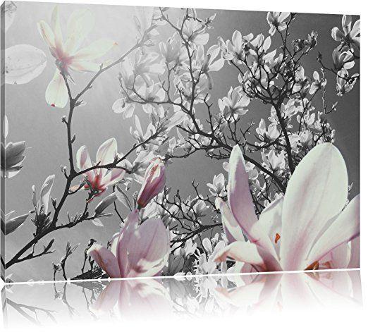 schöne Magnolie Blüten schwarz/weiß Format - Bilder Blumen bilder