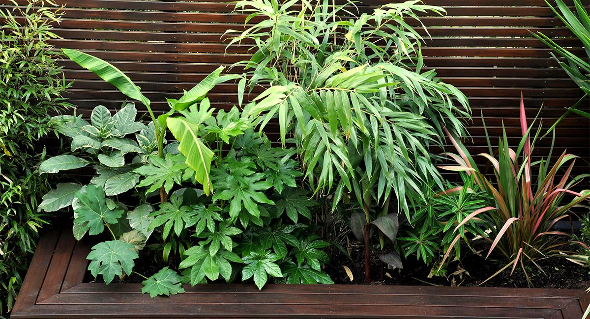 Urban Jungle Garden Design Clapham, London | Bamboo ...