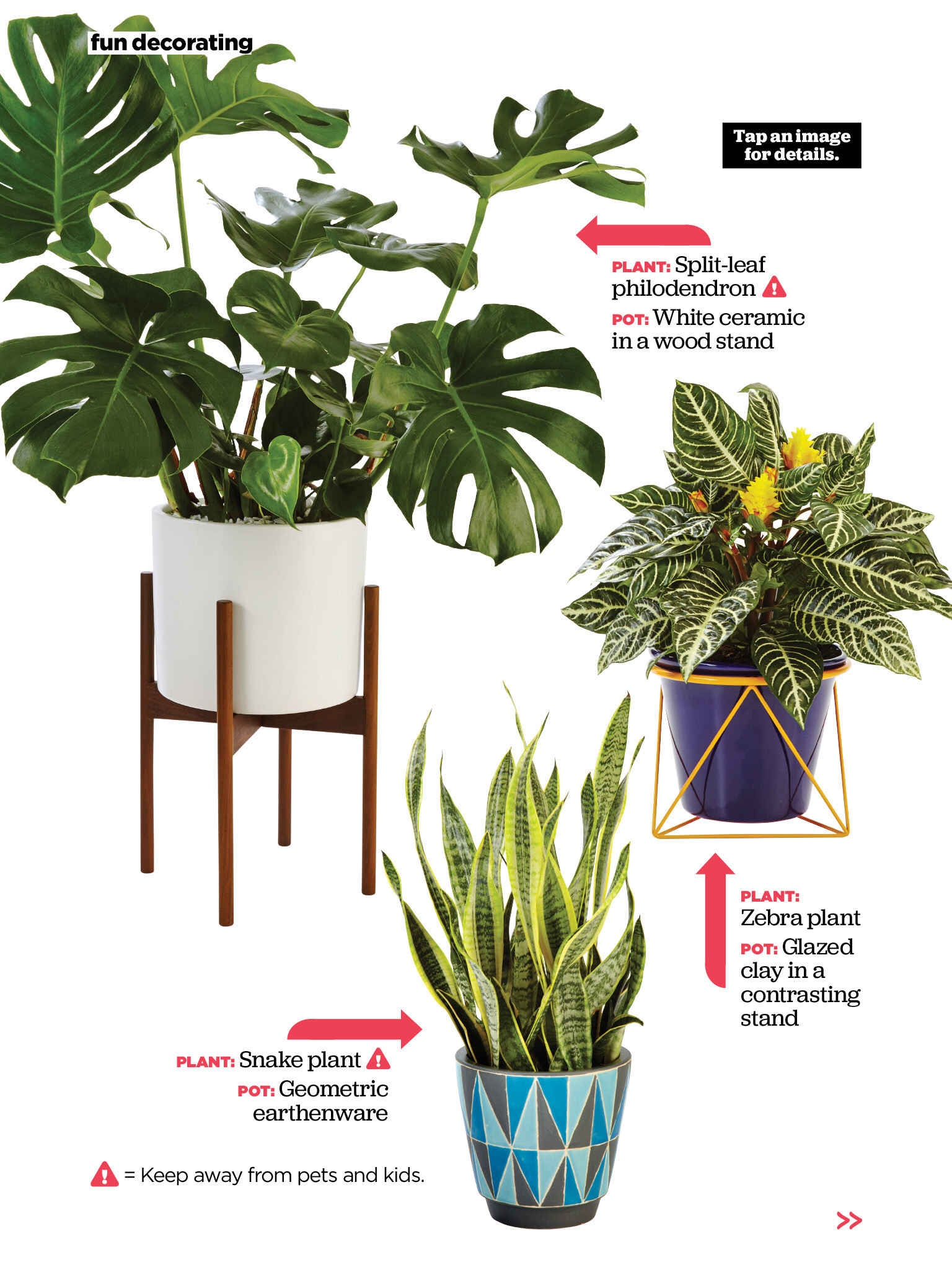 Plants Seeking Pots From Hgtv Magazine, September Read It On