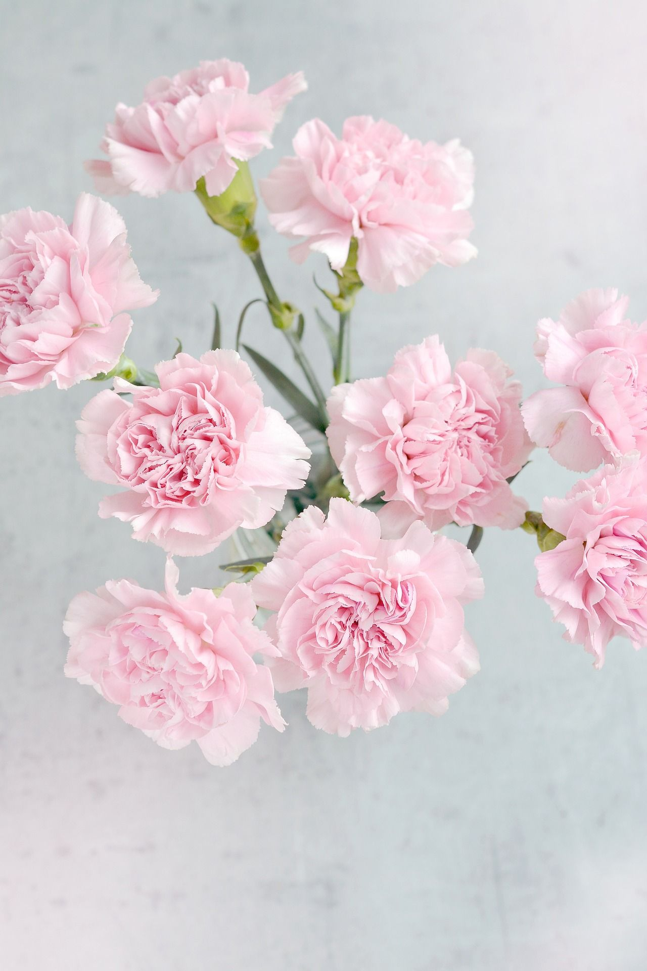 To Extend The Life Of The Flowers Change The Water In The Container Trim The Bottom Of The Stems And Add Another Drop Carnations Flower Care Pink Carnations