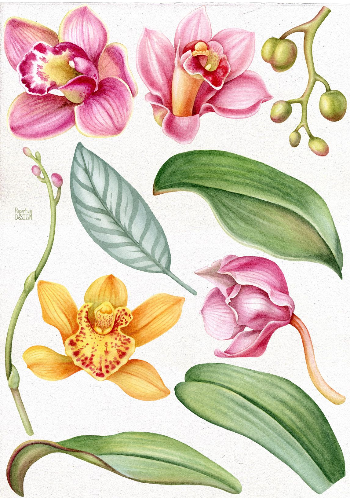 Watercolor Orchids Clip Art Tropical Yellow Pink Orchid Etsy In 2021 Orchid Drawing Orchid Photography Leaf Clipart
