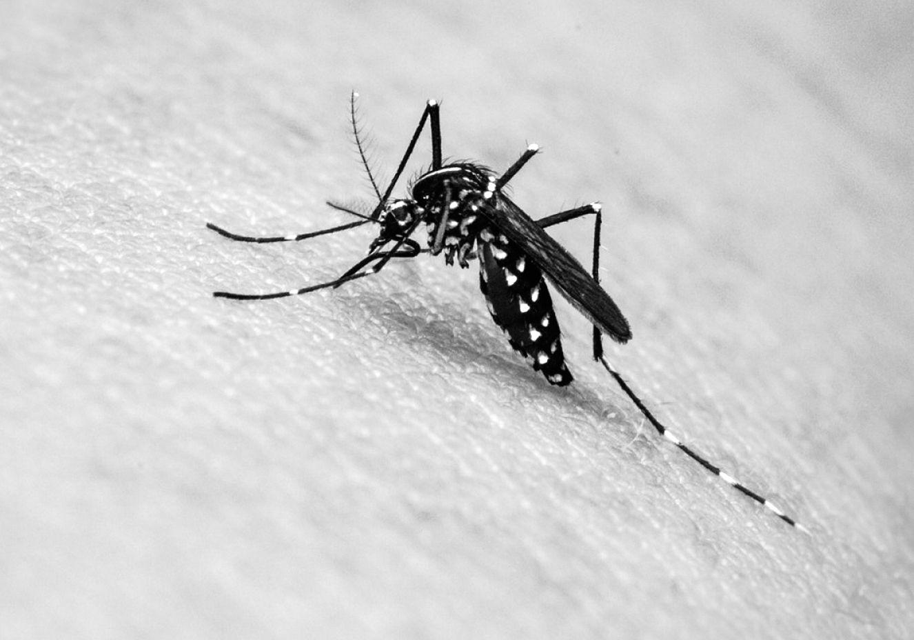 Exames para detectar zika passam a ter cobertura dos planos de saúde