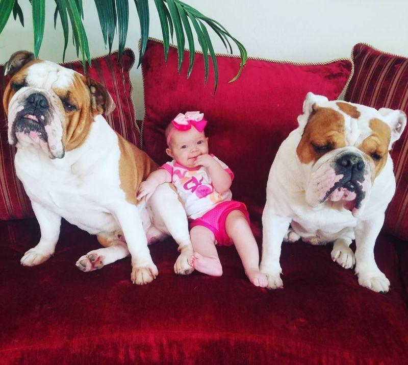 Great Bulldog Canine Adorable Dog - cd8fd05e8960f1fdb219b70ac9e85090  Gallery_968479  .jpg