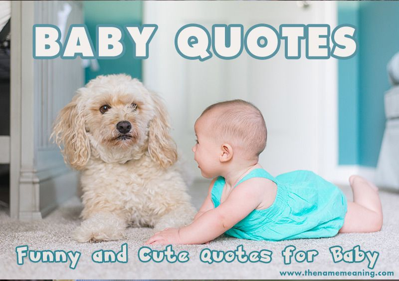 Baby Quotes Funny And Cute Quotes For Baby The Name Meaning Funny Baby Quotes Baby Quotes New Baby Products