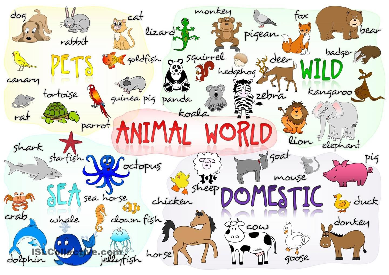 Neruskita ENGLISH 2º Spanish animals, Vocabulary, Learn