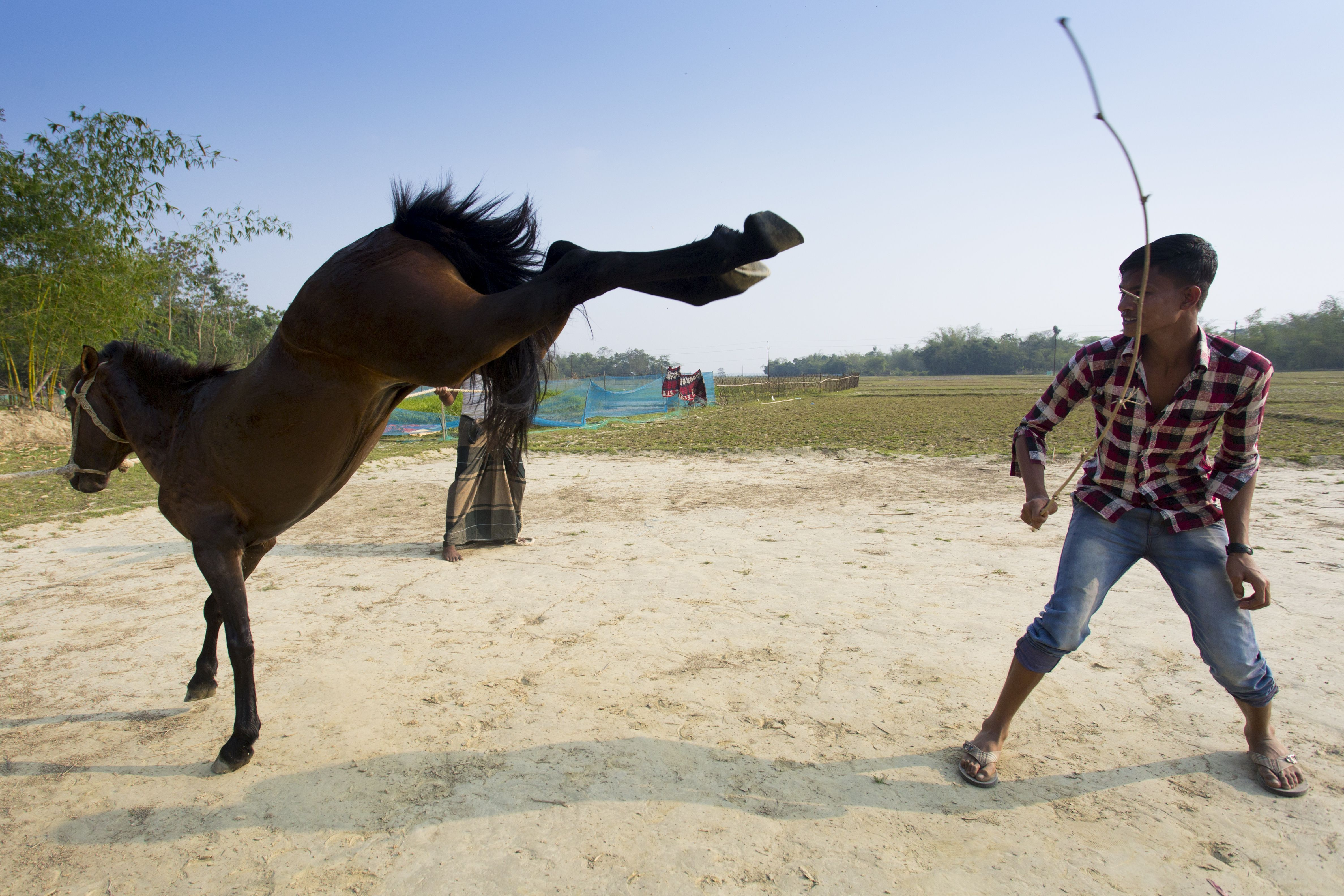 The horse is being trained. by Jahangir Alam Onuchcha