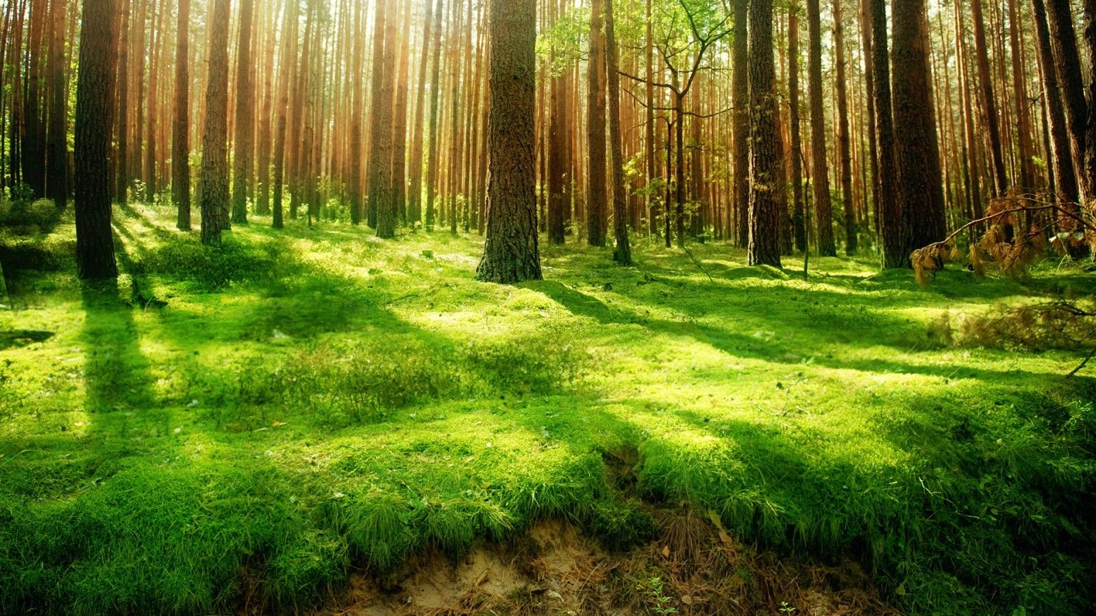 Fantasy Forest Clearing Google Search Forest Scenery