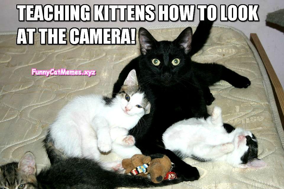 Woman Yelling At Cat Meme Cat Quotes Funny Cat Birthday Memes Cute Cat Memes