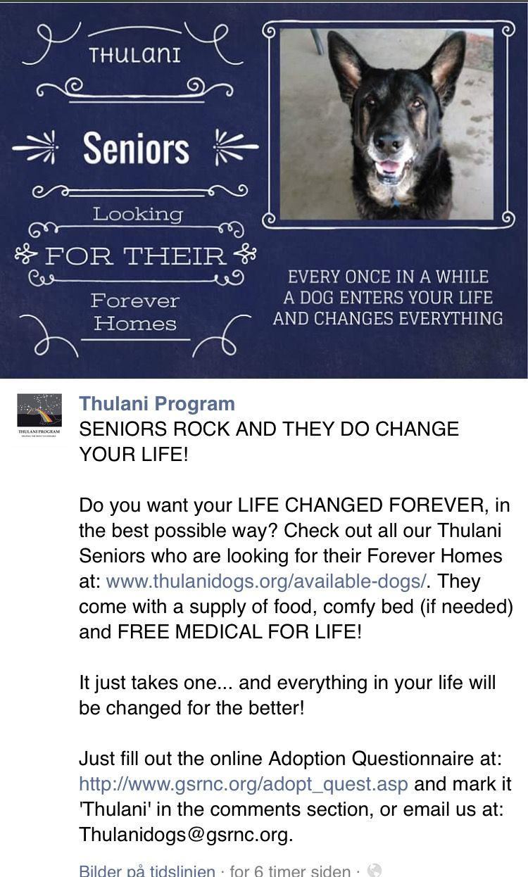 The Thulani Dogs Ij Https M Facebook Com Story Php Story Fbid