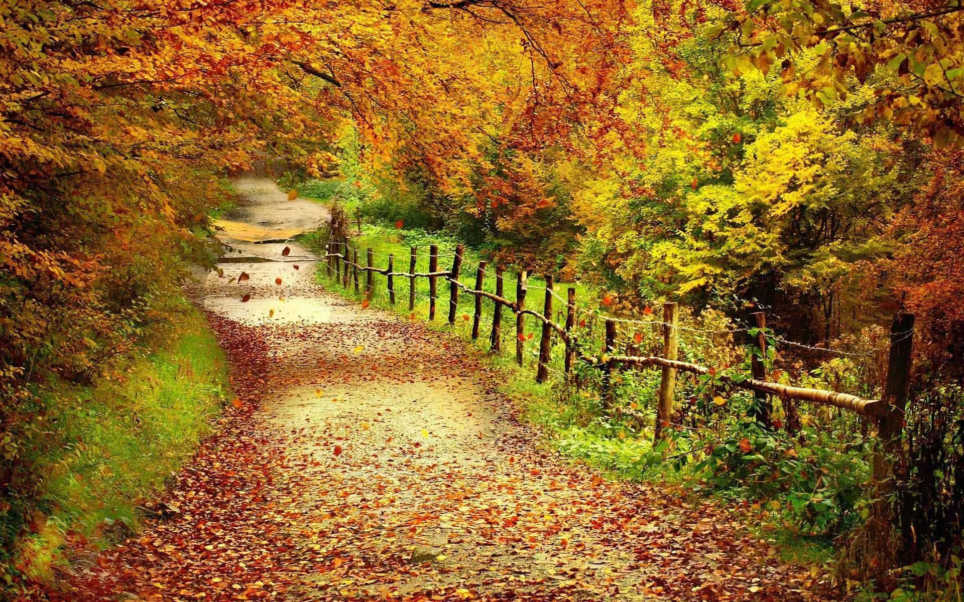 autumn desktop wallpaper fall foliage wallpaper for desktop for desktop