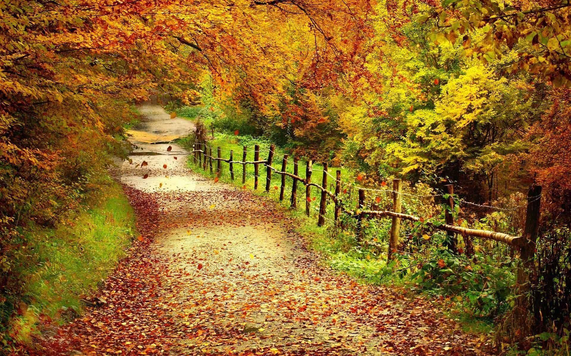 Autumn Desktop Wallpaper fall foliage wallpaper for