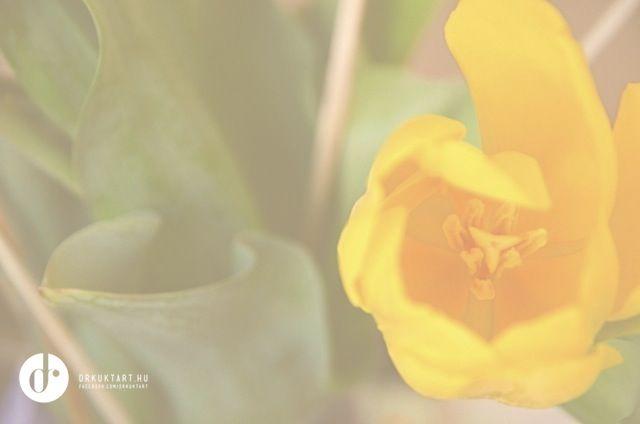 inspiration - spring - tulip More: http://drkuktart.blog.hu/2015/04/03/hetvegi_inspiracio_12_weekend_inspiration