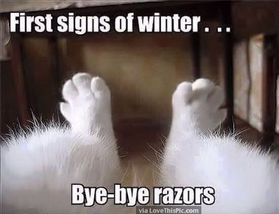 Funny Memes For Winter : First sign of wnter funny things pinterest funny winter quotes