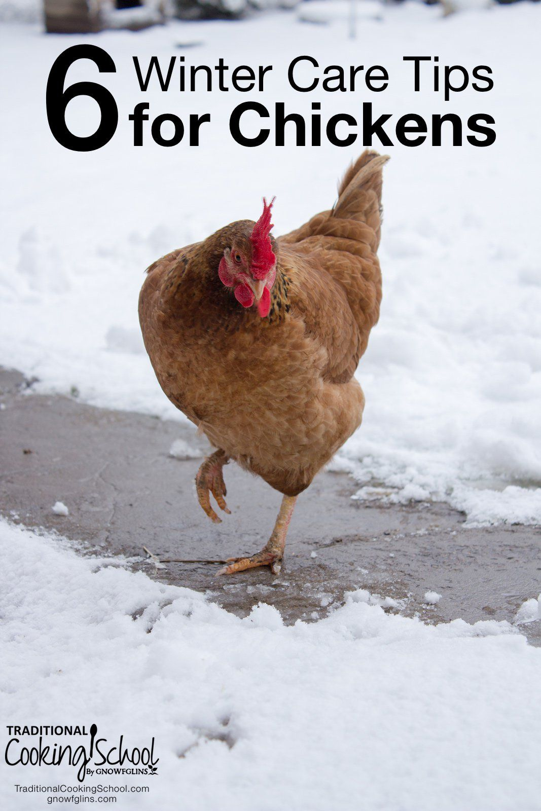 Winter Care For Chickens: Six Tips | Chickens backyard ...