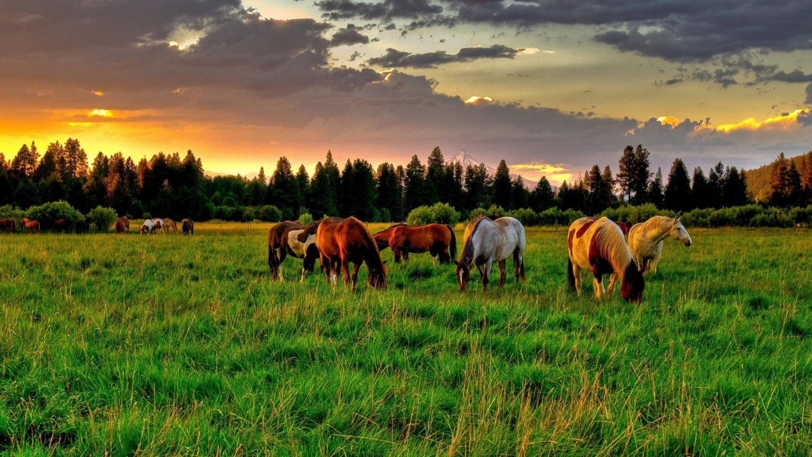 Must see Wallpaper Horse Landscape - cd92640a13dad3e7c513f14fbf737e64  You Should Have_366320.jpg