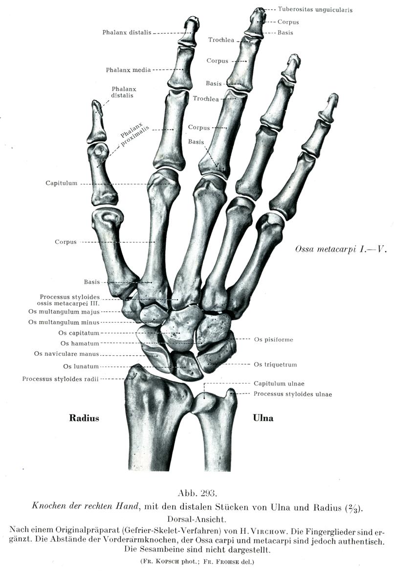 293.png (806×1167) | hands feet | Pinterest