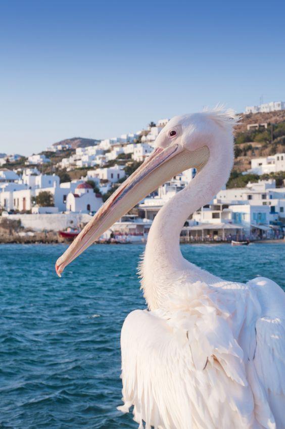 The Pelican of Mykonos, Grecia www.unviajemagico.com