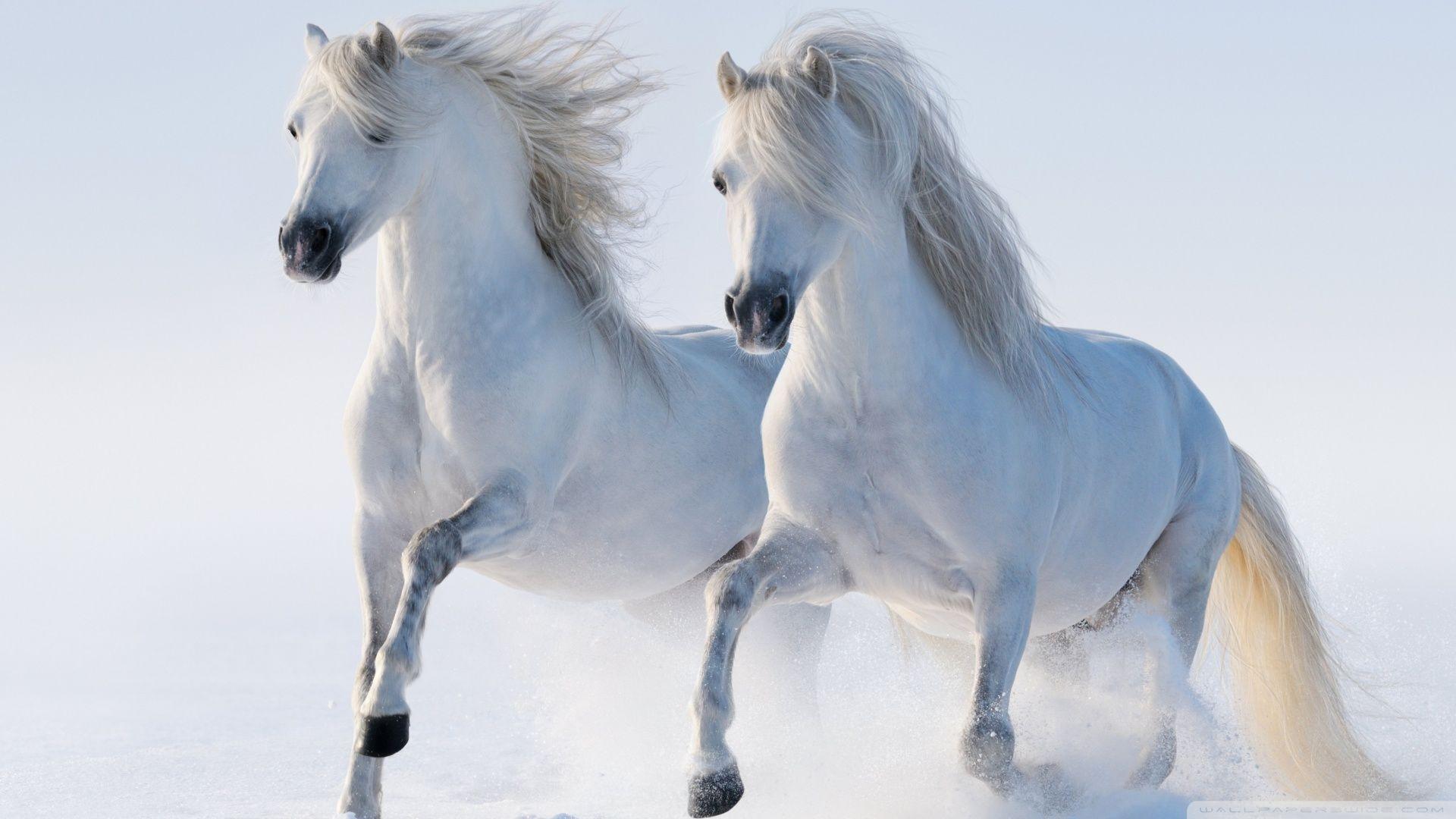 Amazing Wallpaper Horse Snow - cd932d178b3341ea7e166aa83c8ee741  Collection_59871.jpg