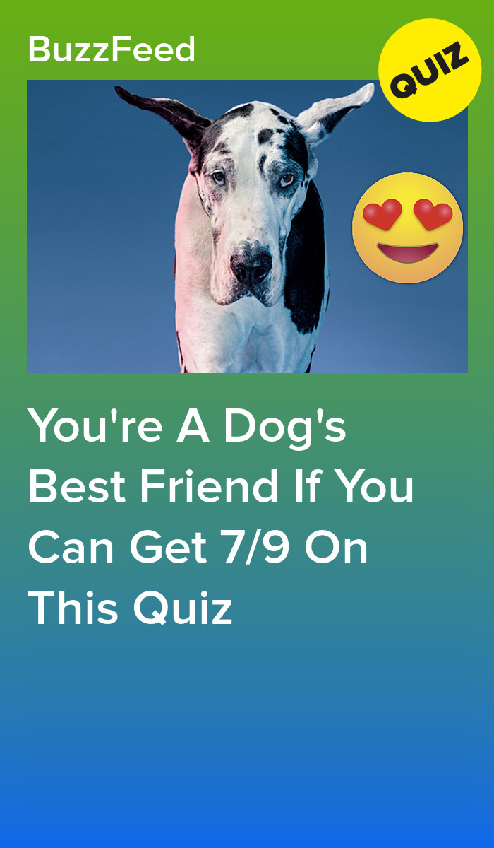 You Re A Dog S Best Friend If You Can Get 7 9 On This Quiz Dog Best Friend Dog Wellness Rich Dog