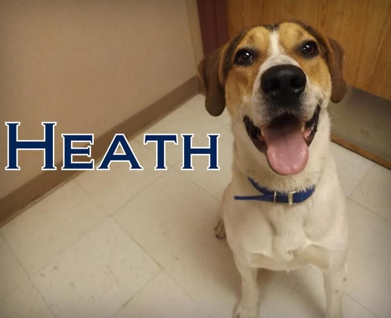 Meet 21514 Heath Is Currently In The Puppies For Parole Program