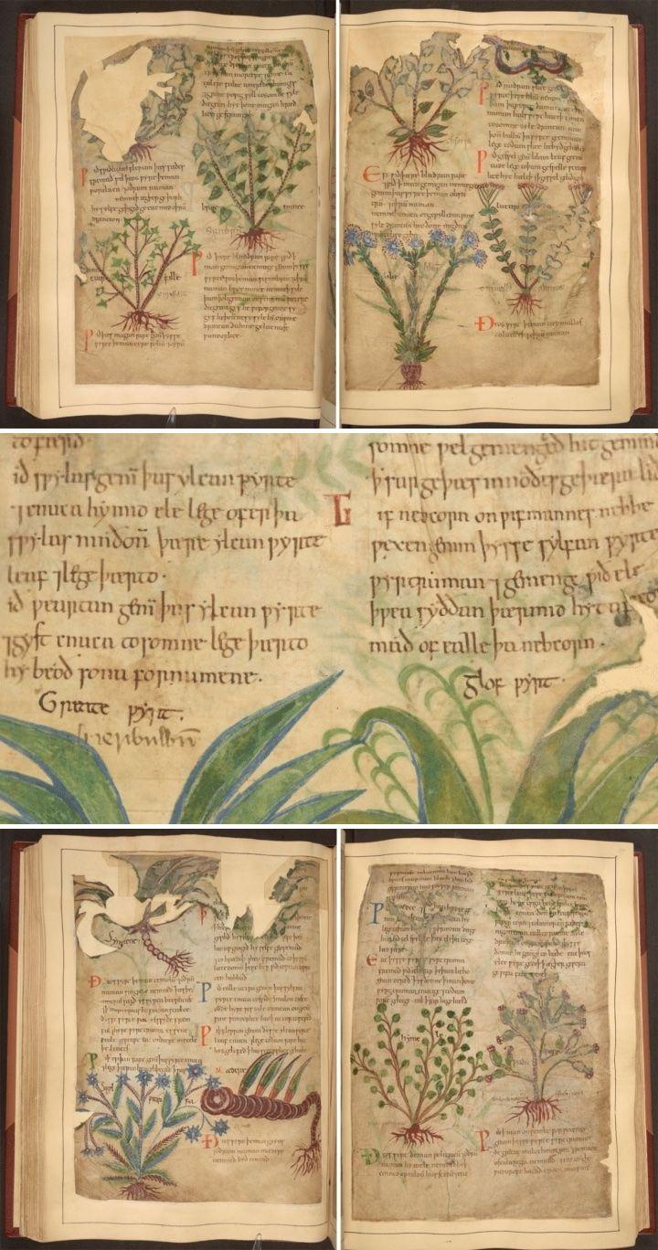 1,000-Year-Old Illustrated Manuscript of Herbal Remedies