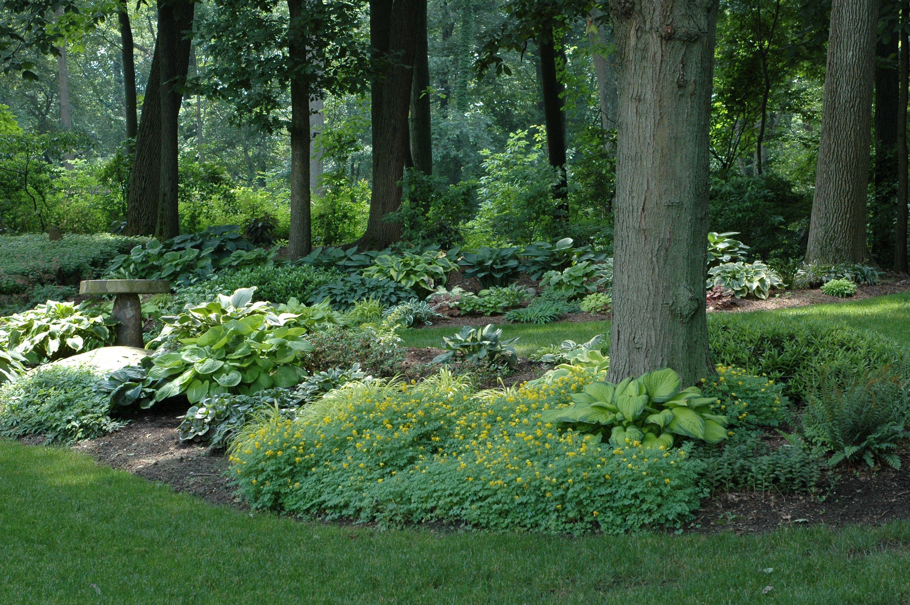 Shade garden woodland landscapes pinterest for Woodland shade garden designs