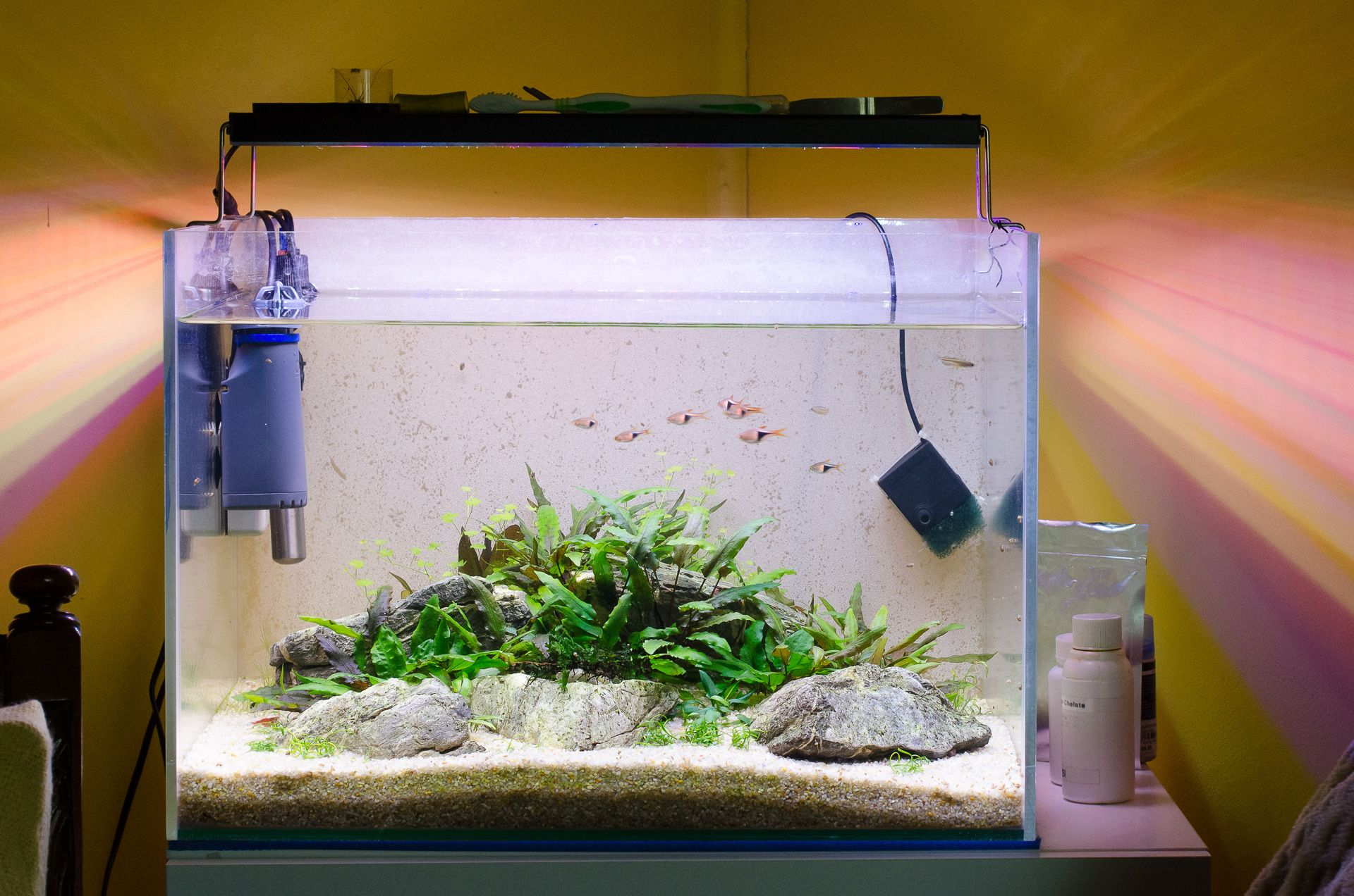Low Tech Tank Show-and-Tell (low tech can be lush too & Low Tech Tank Show-and-Tell (low tech can be lush too! u003d) - Page ... azcodes.com