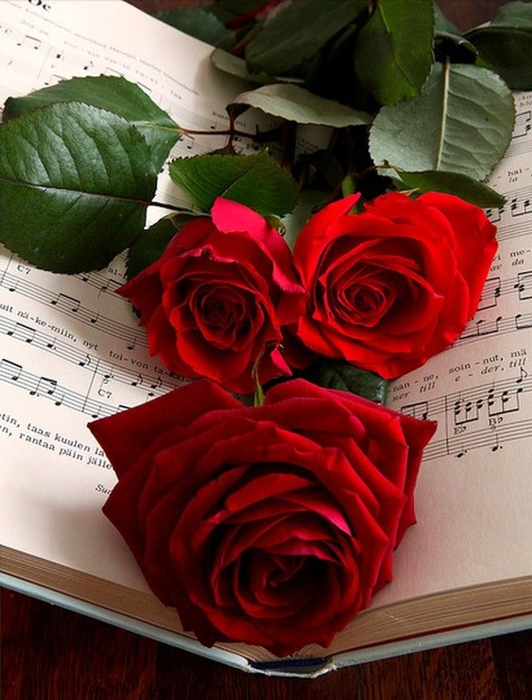 1 The Rose Speaks Of Love Silently In A Language Known Only