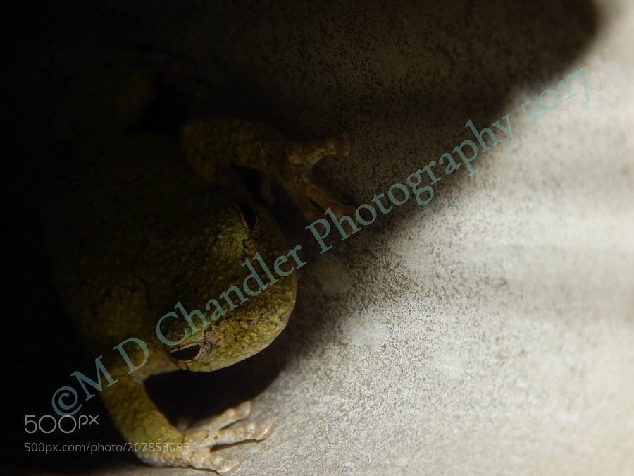 Hiding in the Shadows by mdchandlerphotography