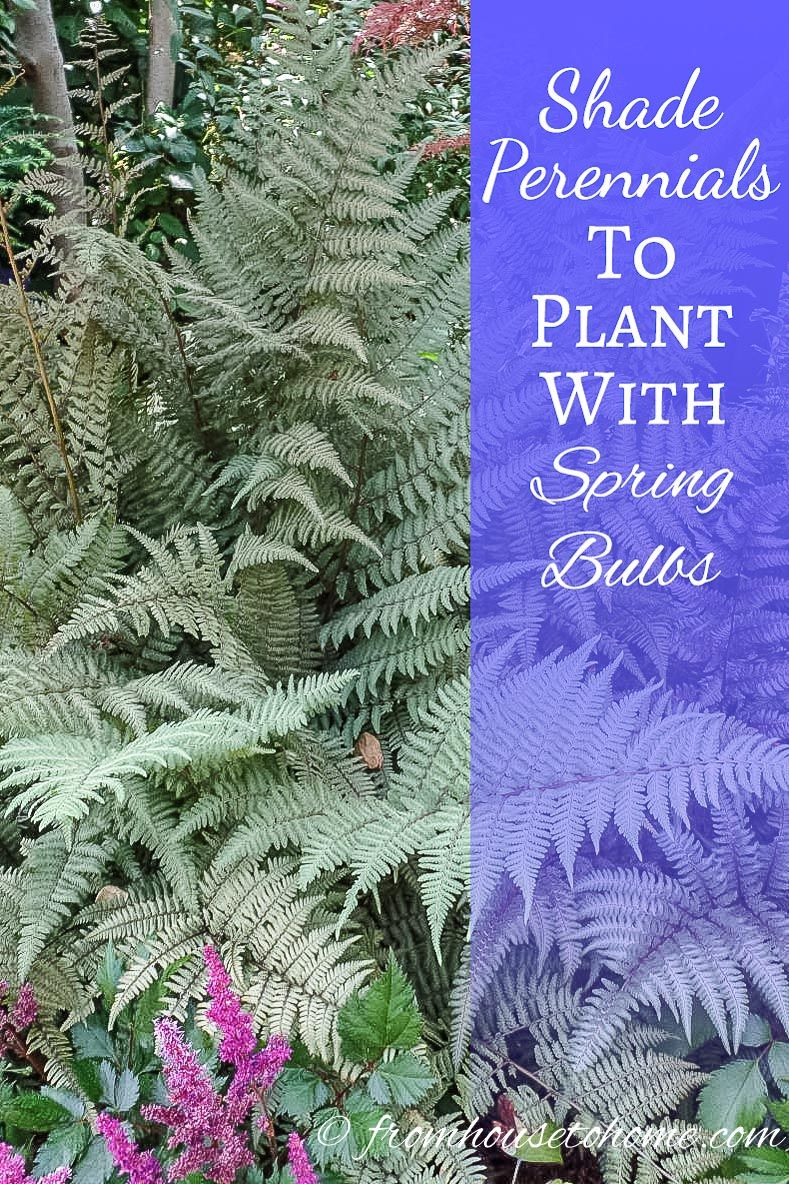 Shade Perennials To Plant With Spring Bulbs