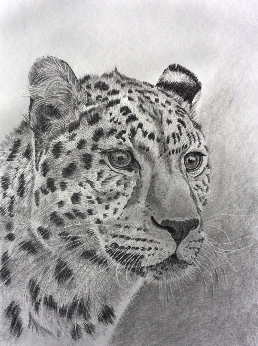 Leopard In Graphite By Sarahharas07 Animals Cat Artwork Counted Cross Stitch Patterns