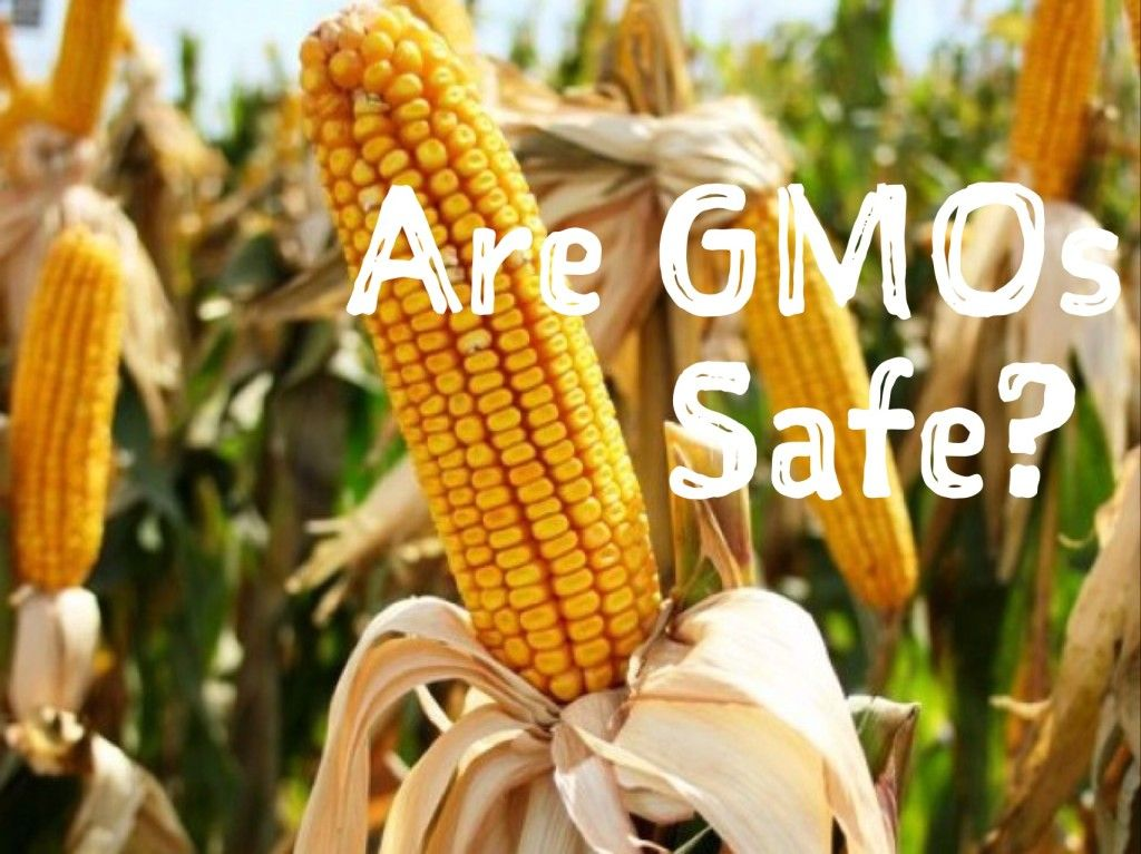 The Problem With GMOs - From the Pasture