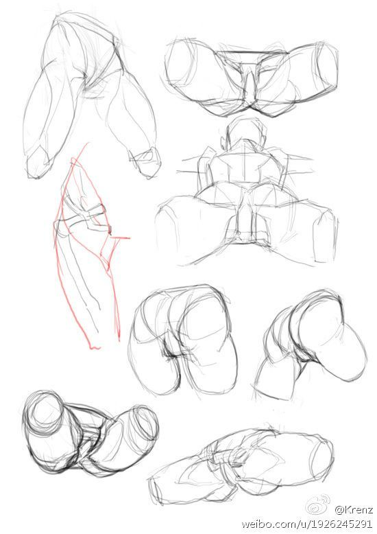 Pin By Philip Nash On Anatomy Pinterest Anatomy Sketches And