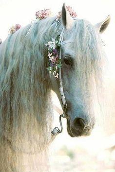 Horse Head Dress on Pinterest