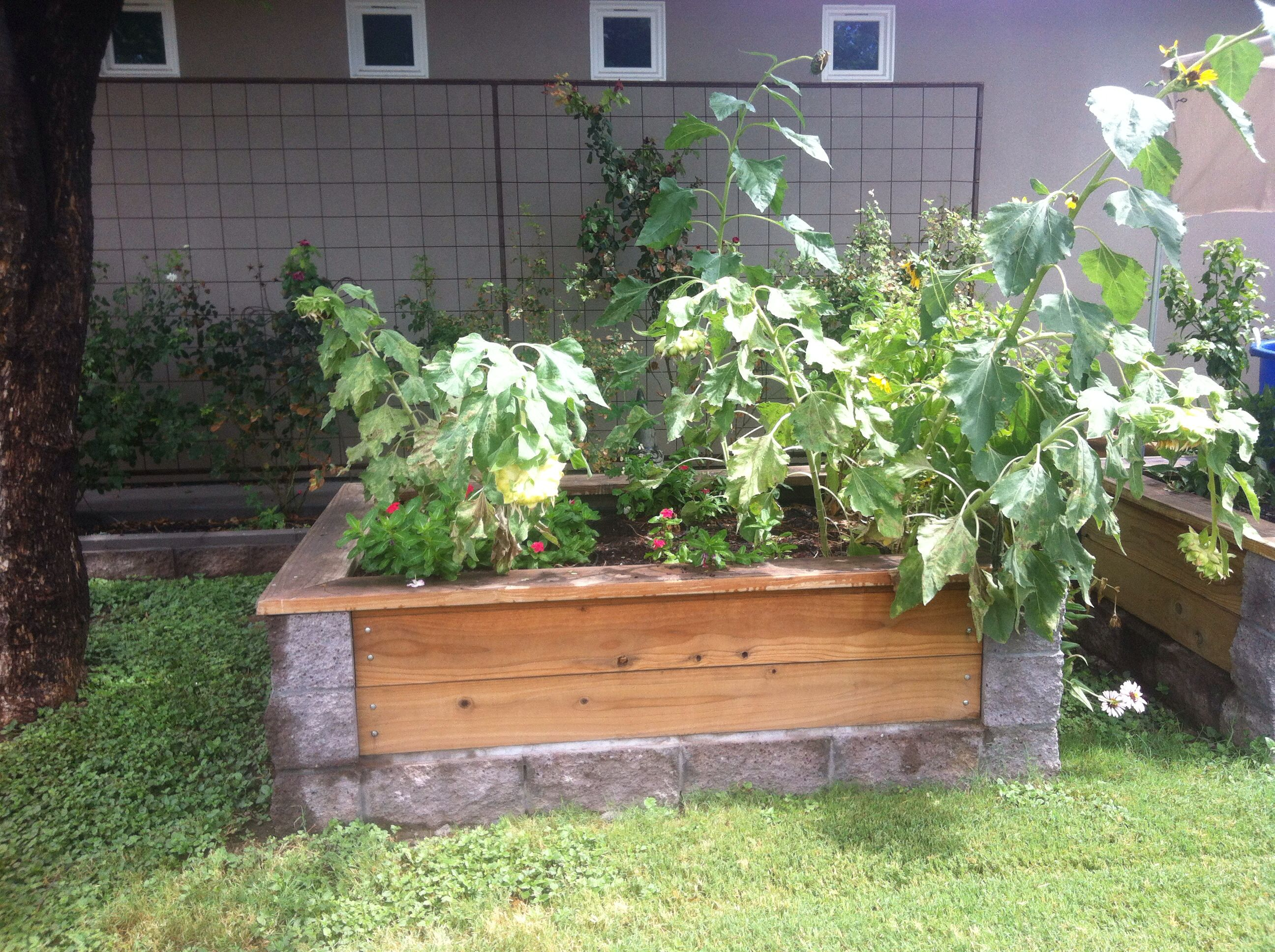 Cinder Block And Wood Garden Bed
