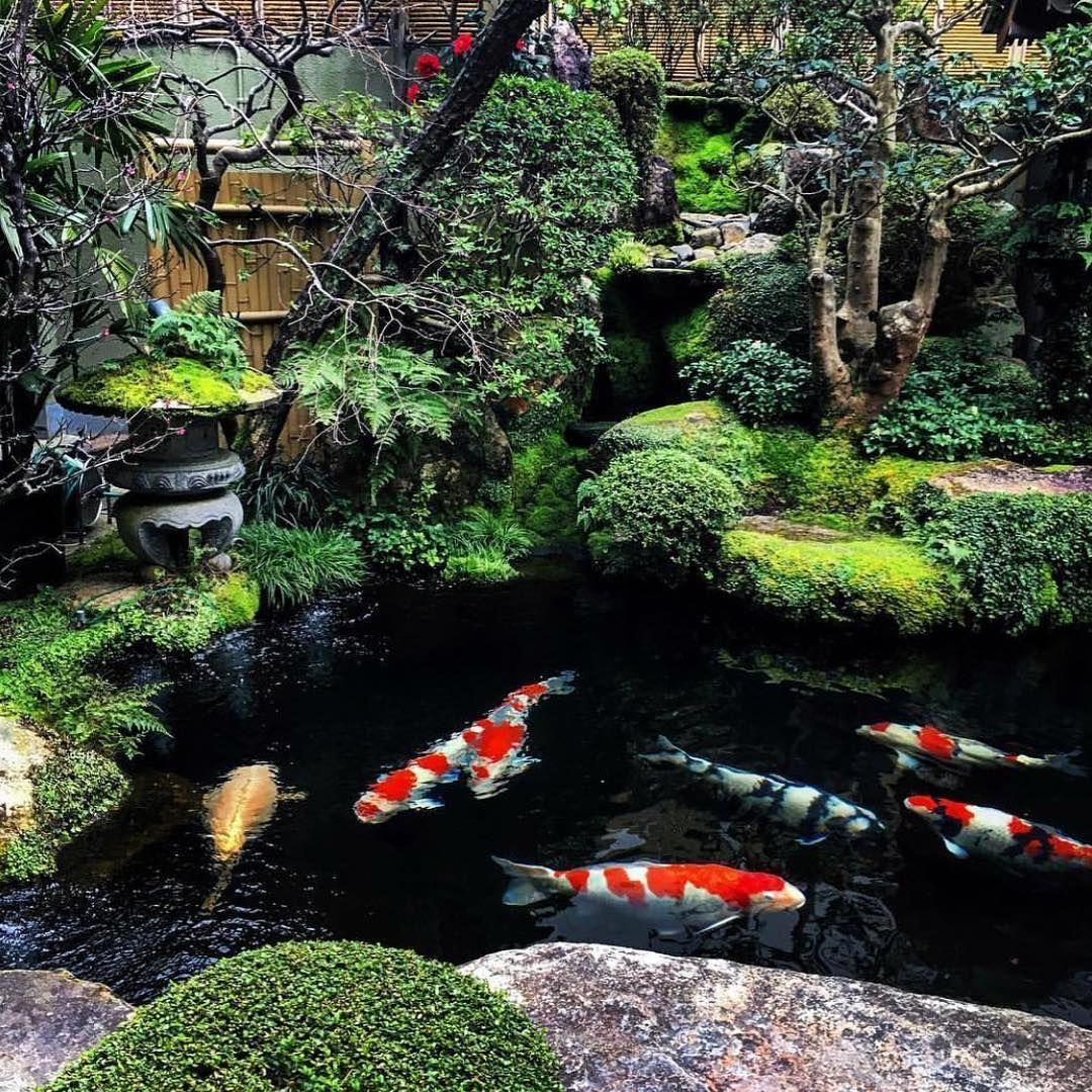 One Of The Most Gorgeous Koi Ponds In The World Located At