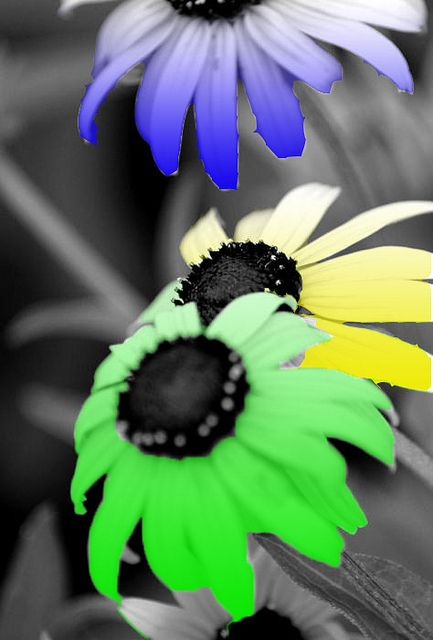 Black And White With Colored Flowers