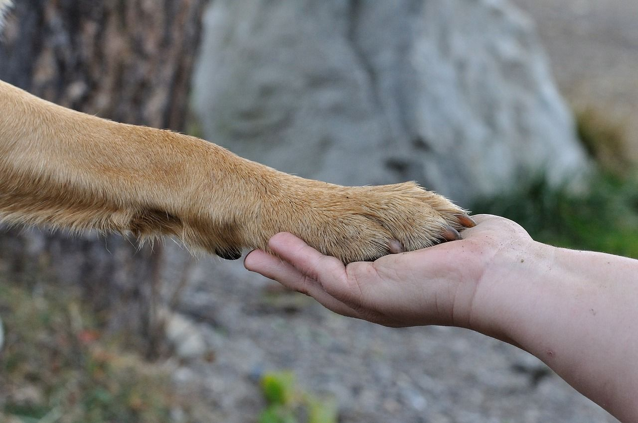 Dry Paws In Dogs Causes And Treatment Dog Paws Cracked Dog Paws Dry Paws