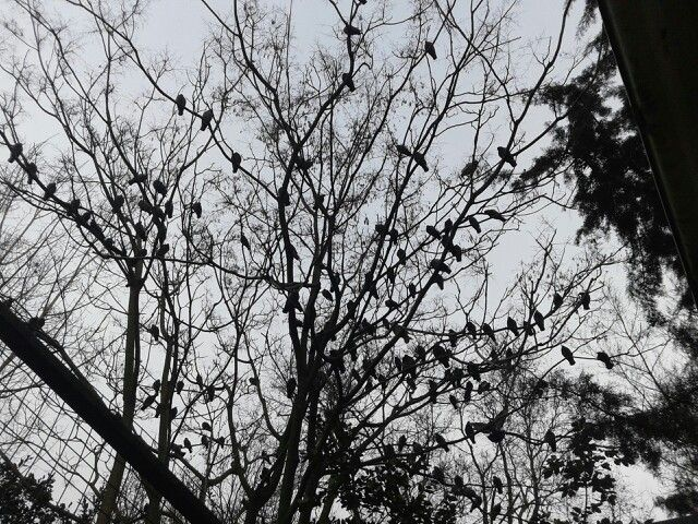 L'albero degli uccelli