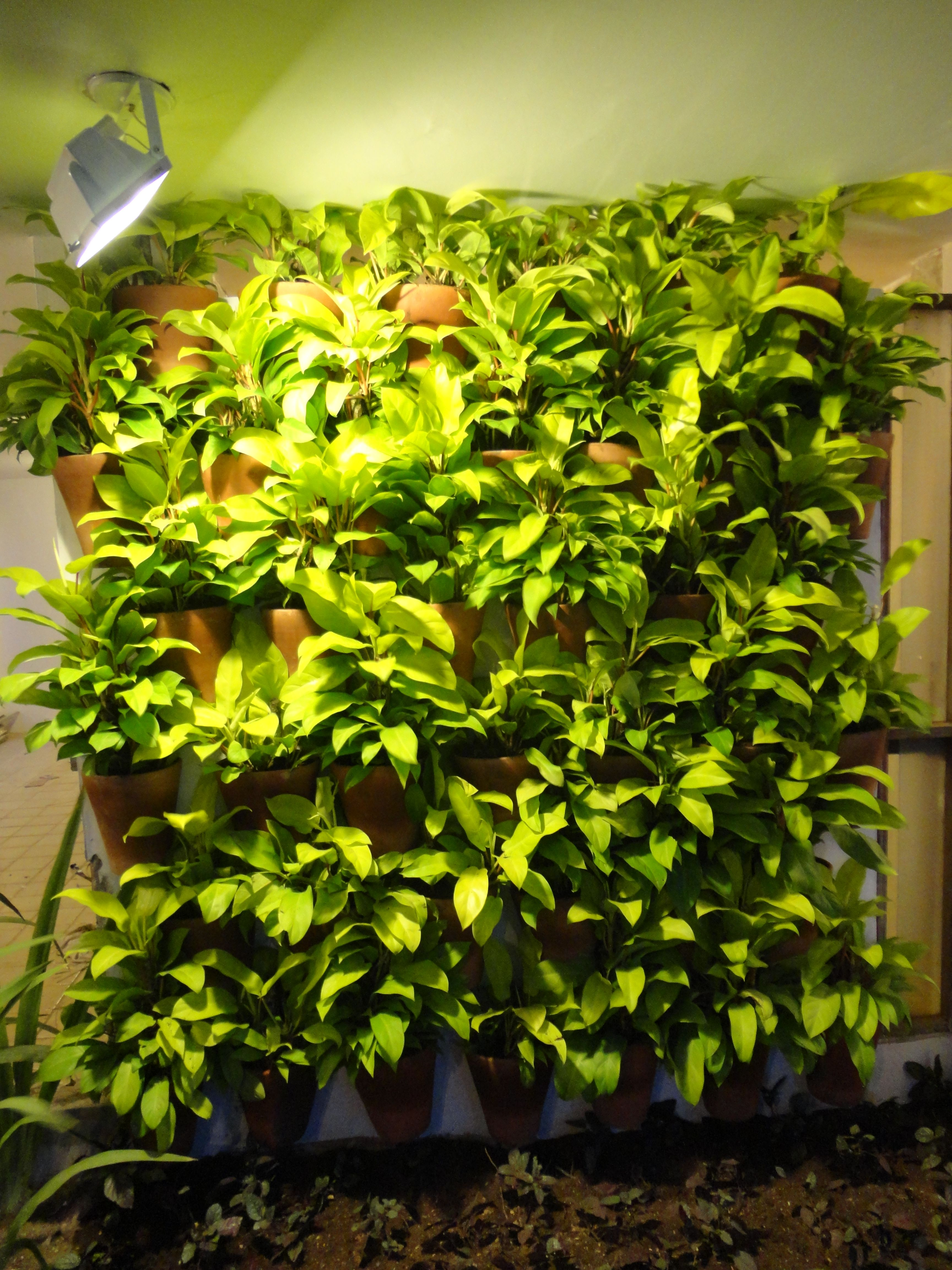 Jardim de loja com jardim vertical