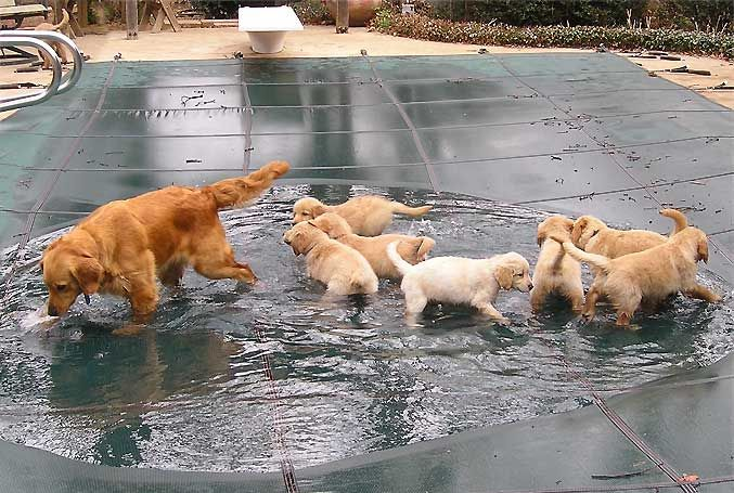 Puddle Play Kids Puppies Are Of The Same Heart All Of Purity