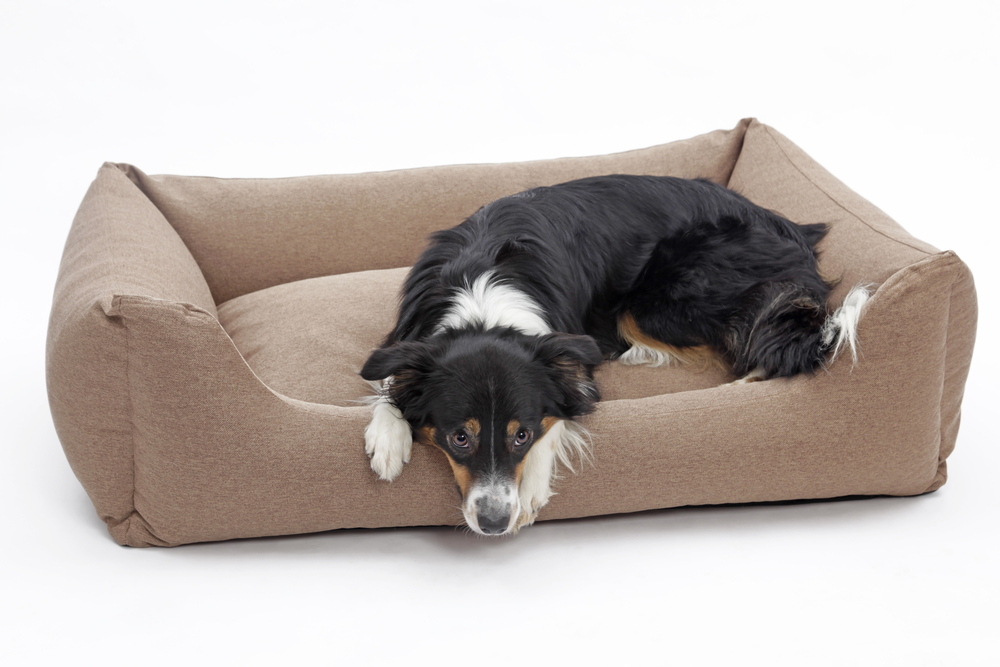 Pin by PetLife Academy on best dog bed for arthritis