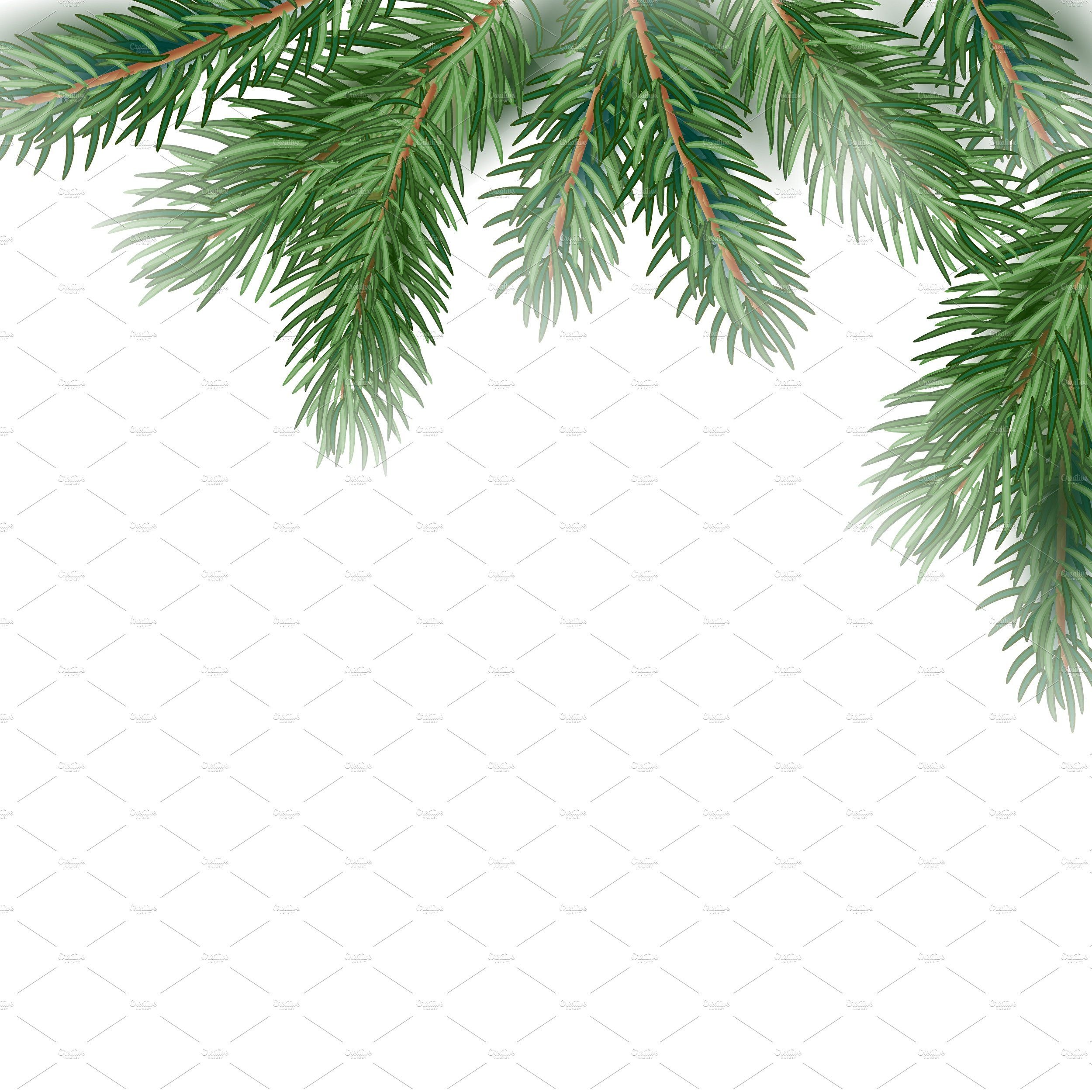 Fir Tree Branches background | Tree photoshop, Family tree ...