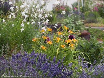 Taglilie und Gaura im Hangbeet | Garten | Pinterest | Pflegeleichte ...