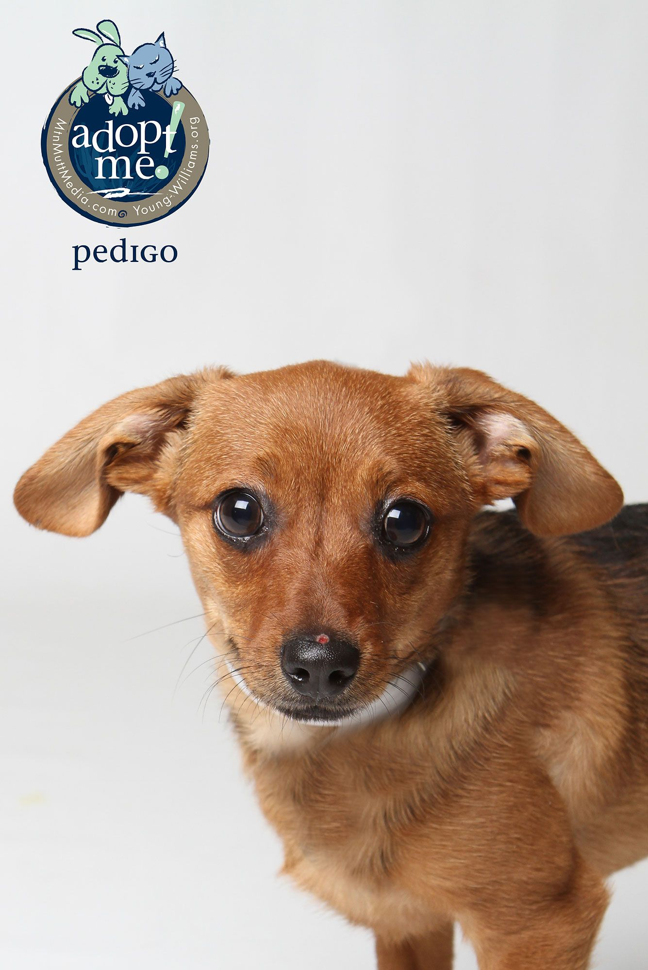 Shelter Dogs, Puppies, Kittens, Cats, Rabbits, Hamsters
