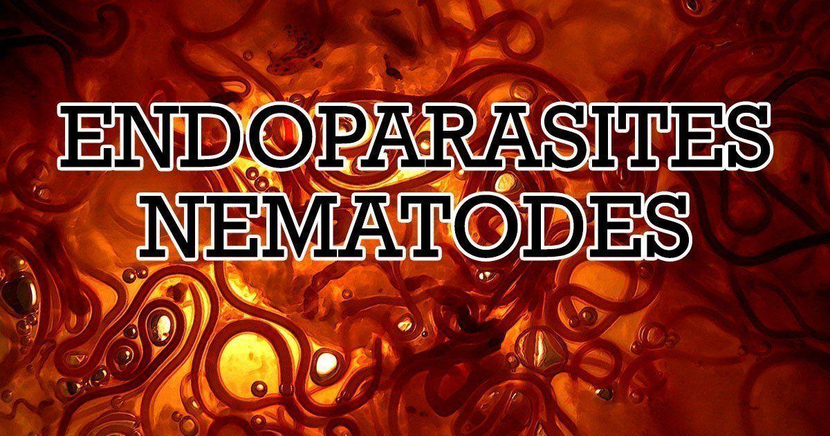 Endoparasites nematodes i love veterinary veterinary